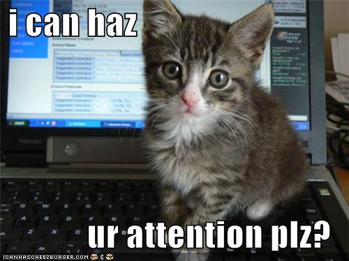 Distraction cat - i can haz ur attention plz?